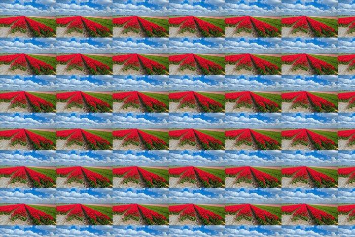 Vinylová Tapeta Červený tulipán pole na jaře - Nebe
