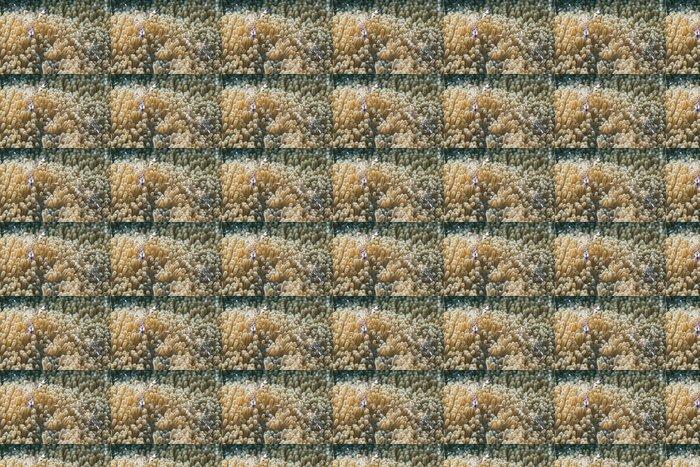 Vinylová Tapeta Krevety uvnitř sasanky - Vodní a mořský život