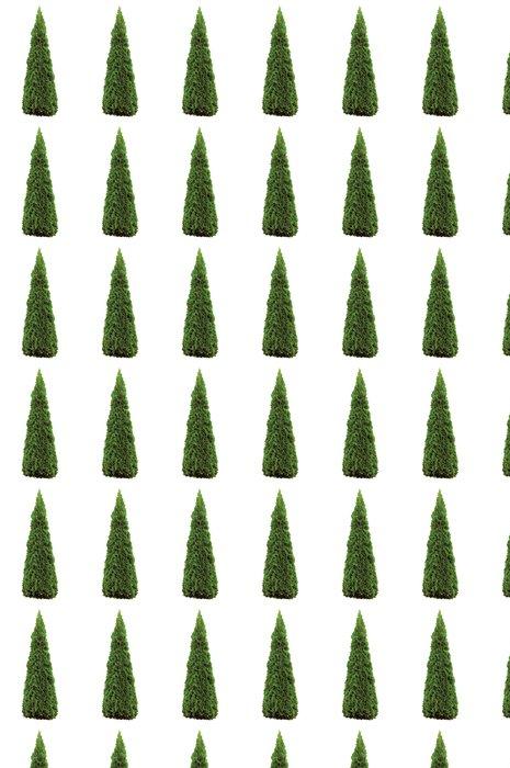 Vinylová Tapeta Thuja occidentalis 'Smaragd' American Arborvitae, izolované - Roční období