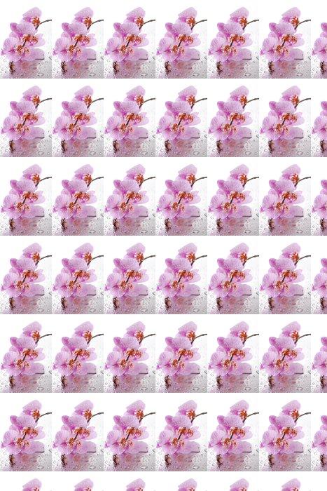 Vinylová Tapeta Růžové krásné orchideje s kapkami - Květiny