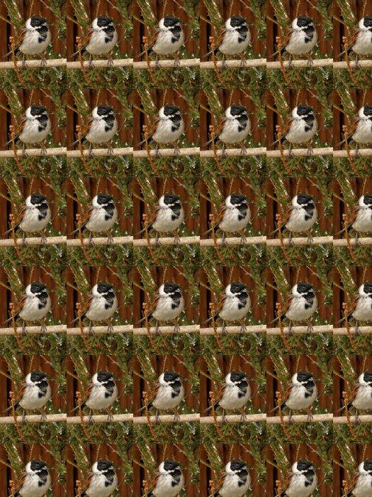 Vinil Duvar Kağıdı Kiraz kuşu - Kuşlar