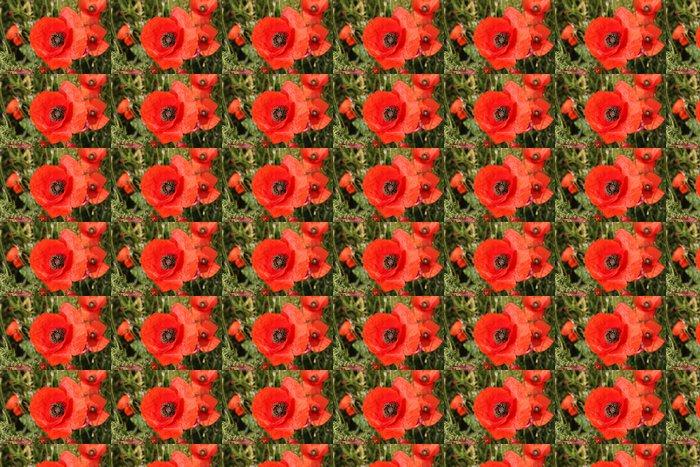 Vinylová Tapeta Gros coquelicot - Květiny