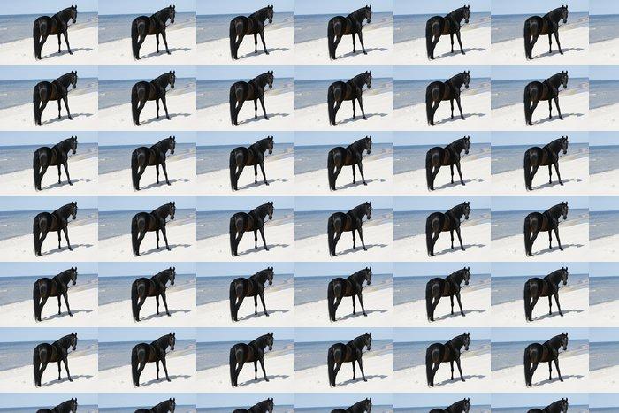 Vinylová Tapeta Krásnejch hřebec volně stojící na pláži - Savci