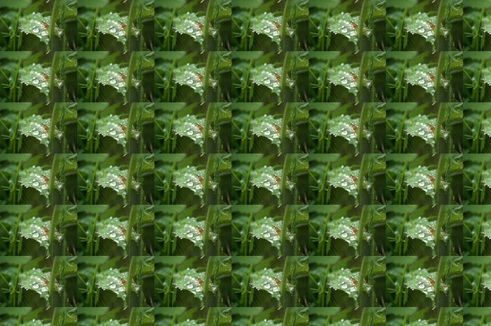 Vinylová Tapeta Gotas de lluvia 03 - Roční období