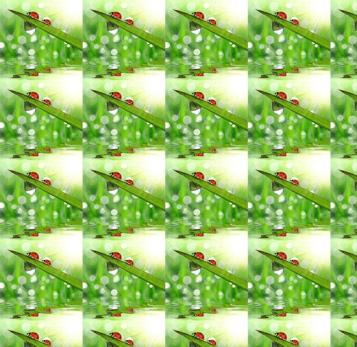 Vinylová Tapeta Čerstvé ranní rosa na jarní trávy a malé slunéčko sedmitečné - Ostatní Ostatní