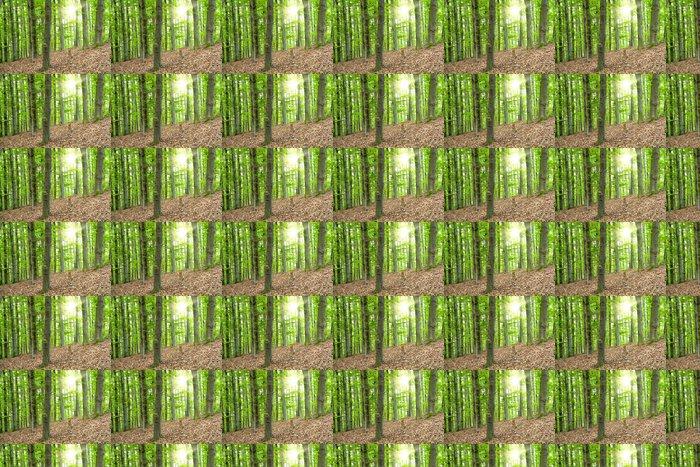 Vinylová Tapeta Krásná krajina s bukovým lesem a slunečními paprsky - Stromy