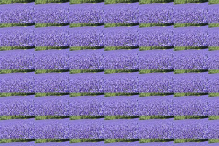 Vinylová Tapeta Levandulová pole - Květiny