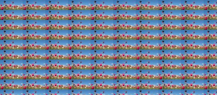 Vinylová Tapeta Bunte tulpen vor blauem Himmel - Rostliny a květiny