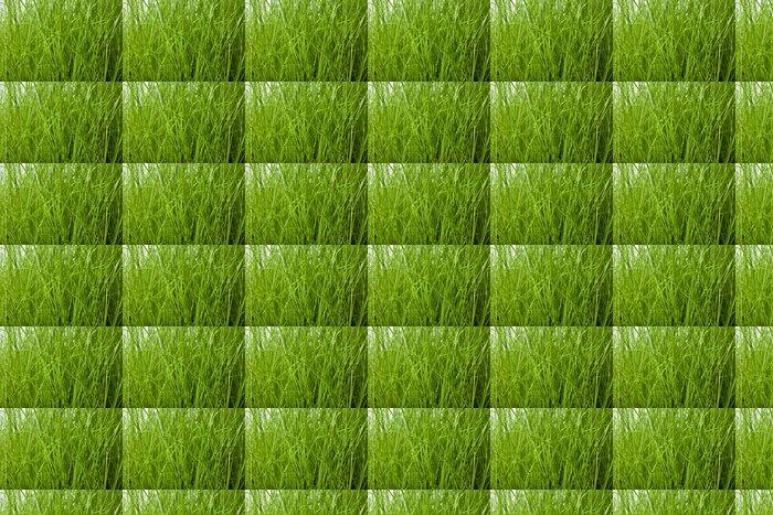 Vinylová Tapeta Zblízka pohled na kapkami rosy na zelené trávě - Roční období