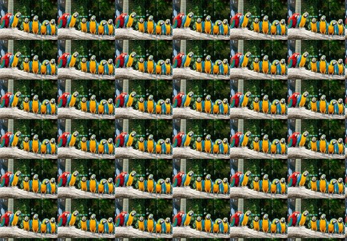 Vinylová Tapeta Barevné macaws sedí na stromě - Papoušci