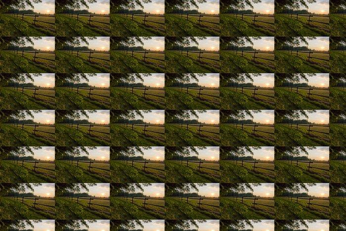 Vinylová Tapeta Paddock ve večerním světle - Příroda a divočina