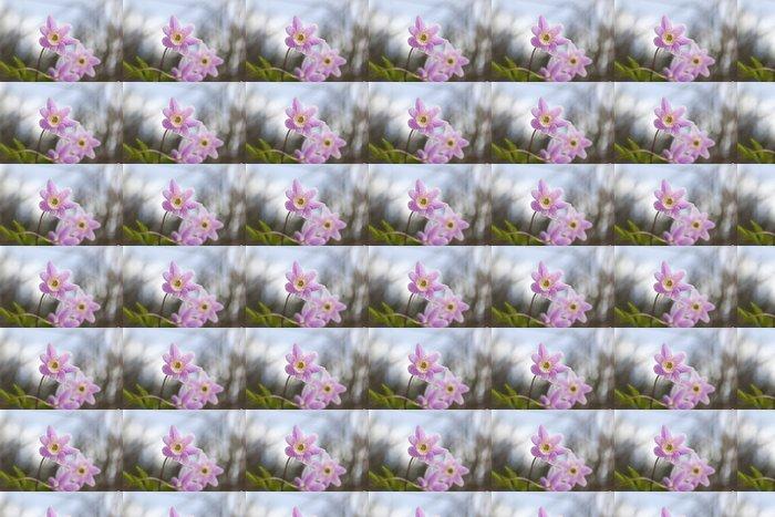 Vinylová Tapeta Krásná Sasanka (Anemone nemorosa) - Roční období