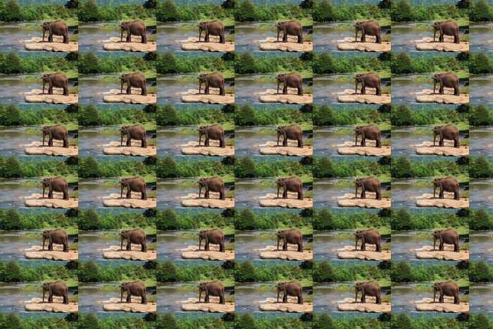 Vinylová Tapeta Sloni z Pinnawala sloní sirotčinec koupání v řece - Témata