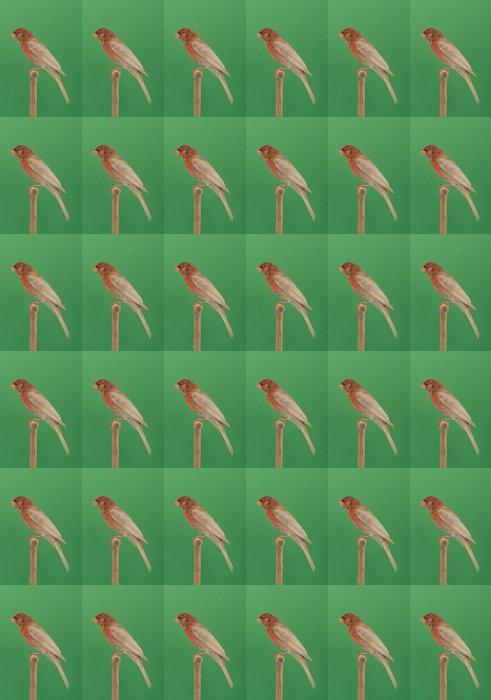 Vinylová Tapeta CARPODACO messicano - Ptáci