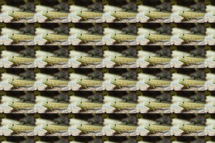 Vinylová Tapeta Valenciennea puellaris - Vodní a mořský život