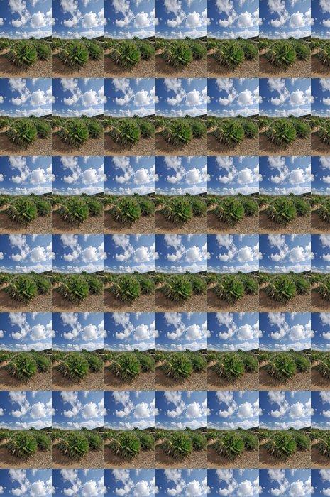 Vinylová Tapeta Trpasličí palma (Chamaerops humilis), Sardinie, Itálie, Evropa - Evropa