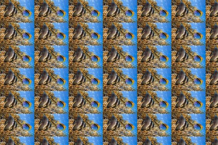 Vinylová Tapeta Spadefish v Rudém moři - Vodní a mořský život