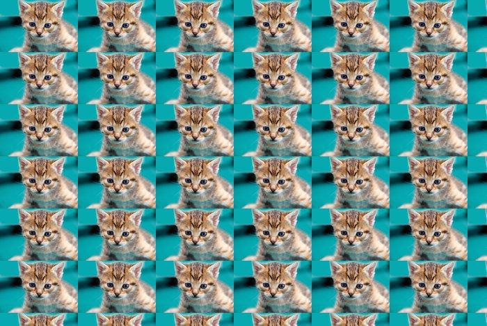Vinylová Tapeta Rozkošný kitty - Savci