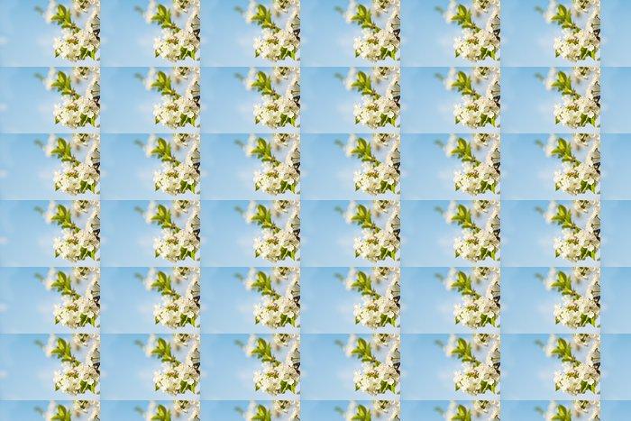 Vinylová Tapeta Květ jabloně - Jabloně