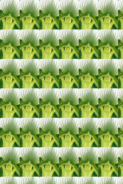 Vinylová Tapeta Green White Paphiopedilum callosum maudiae květ orchideje - Květiny