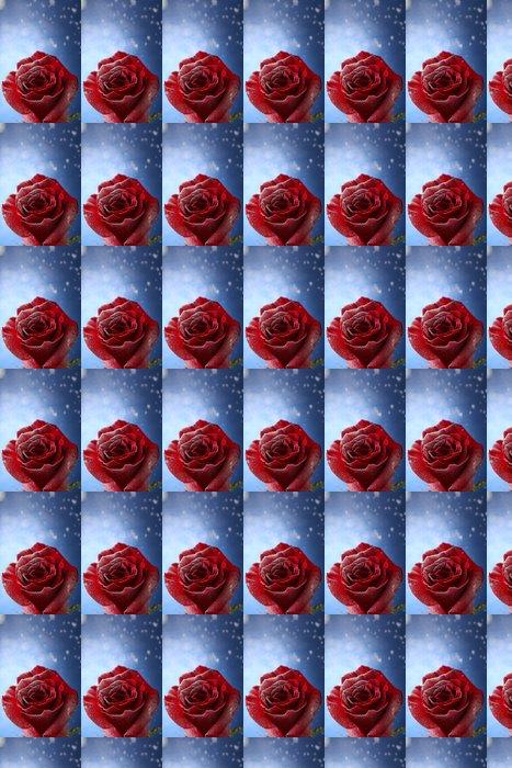 Vinylová Tapeta Červená růže ve sněhu na modrém pozadí - Květiny