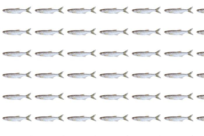 Vinylová Tapeta Malý sladkovodní ryby - Nálepka na stěny