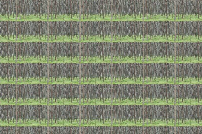 Vinylová Tapeta Topoly - Zemědělství