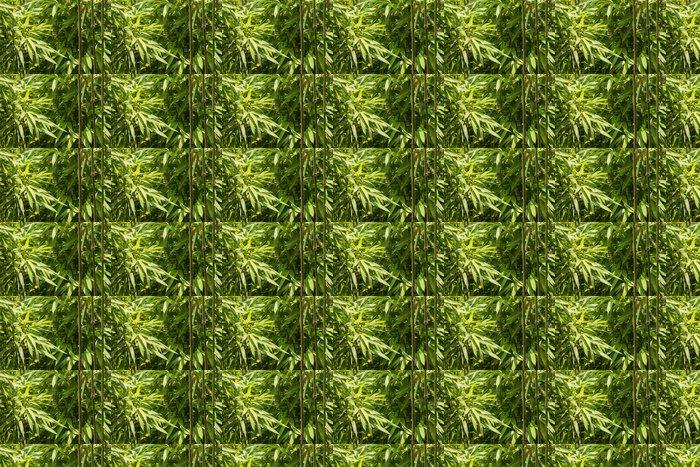 Vinylová Tapeta Zblízka z čerstvých bambusových listů a stvolů - Rostliny