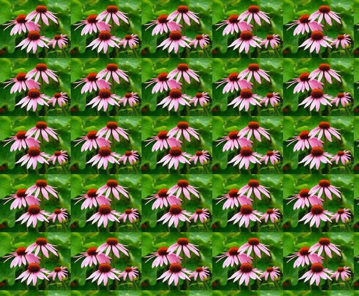 Vinylová Tapeta Echinacea purpurea - Zdraví a medicína