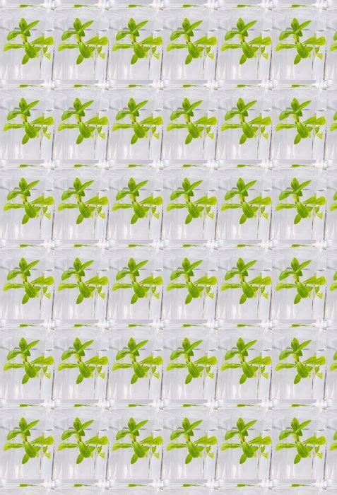 Vinylová Tapeta Zelená voda - Alkohol