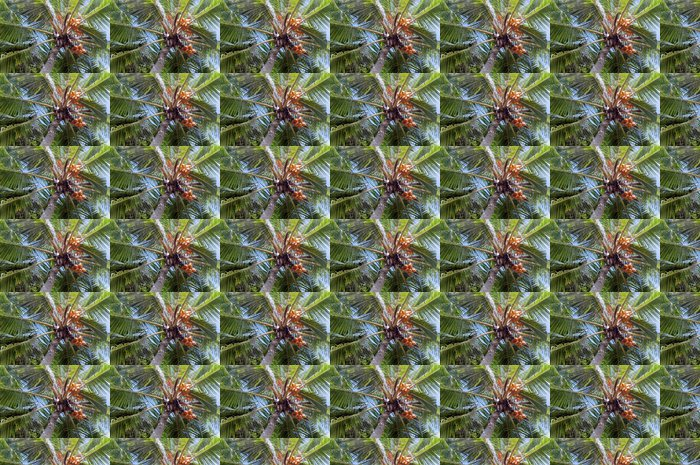Vinylová Tapeta Pohled do koruny palmy - Asie