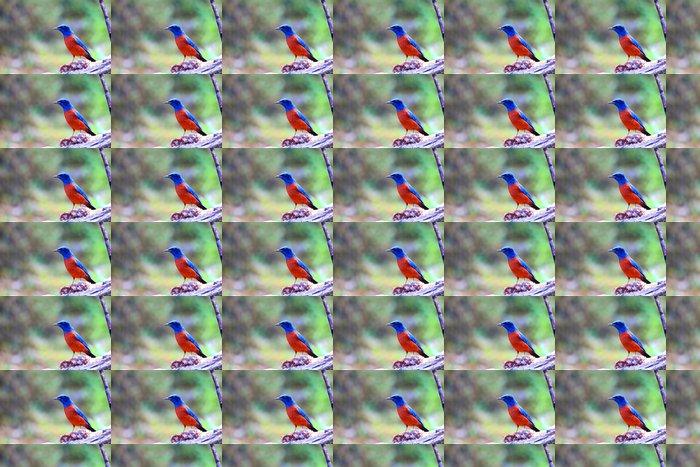 Vinylová Tapeta Kaštan kuňka rock drozd (Monticola rufiventris) - Přírodní krásy
