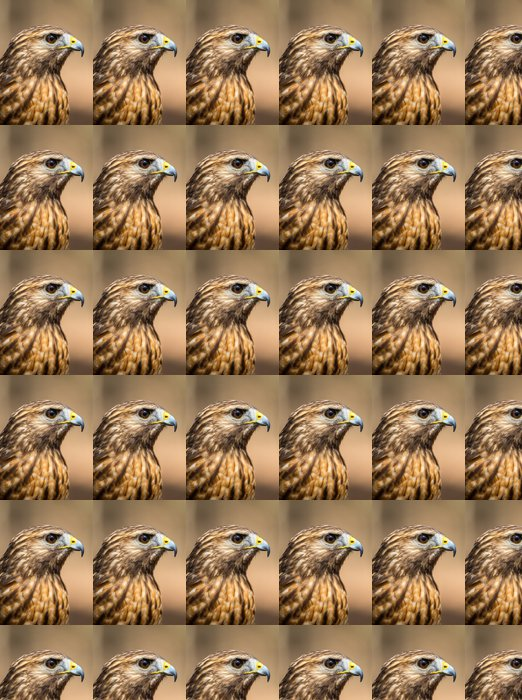 Vinylová Tapeta Red-tailed Hawk - Ptáci