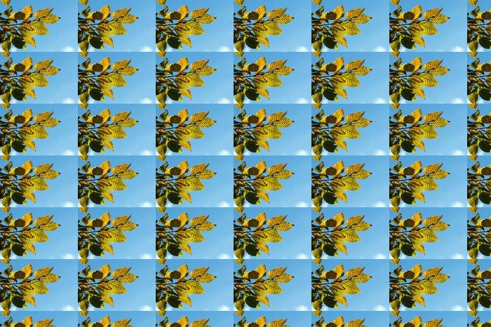 Vinylová Tapeta Žluté podzimní habr listy proti modré obloze - Roční období