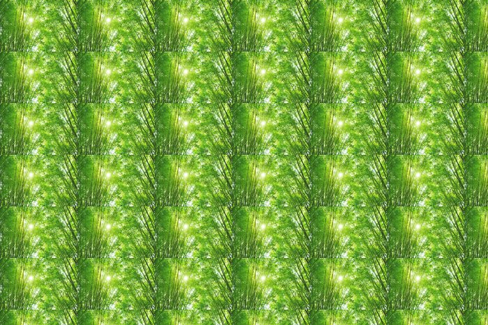 Vinylová Tapeta Bambusové lesy a sluneční světlo - Rostliny