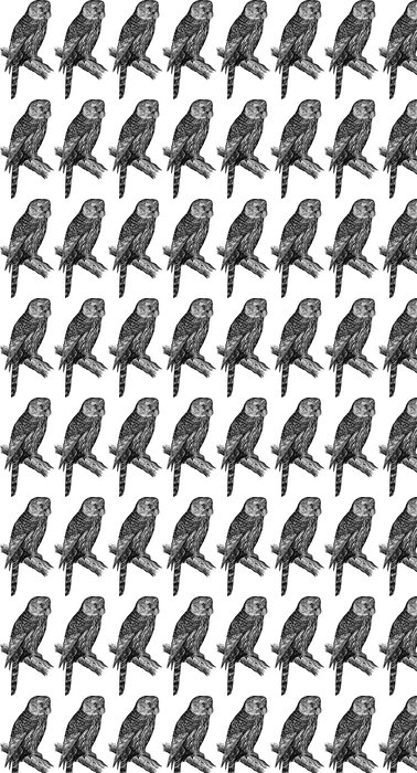 Vinylová Tapeta Sova - Ptáci