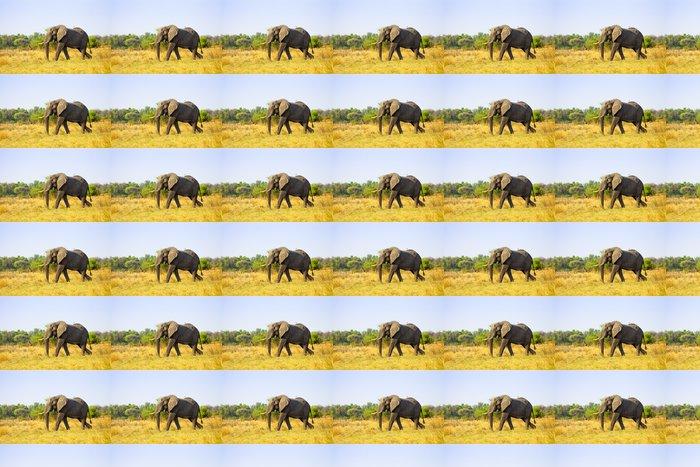 Vinylová Tapeta Velké Slon africký - Témata