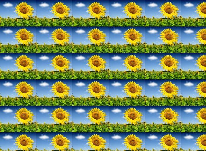 Vinylová Tapeta Krásné slunečnice proti modré obloze - Zemědělství