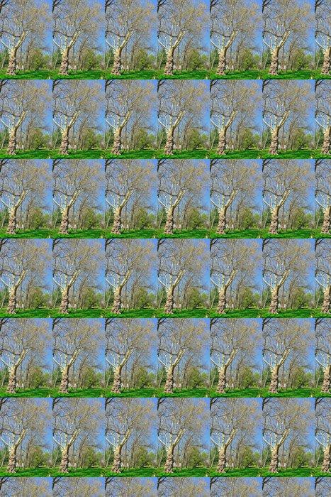 Vinylová Tapeta Starý strom v parku - Roční období