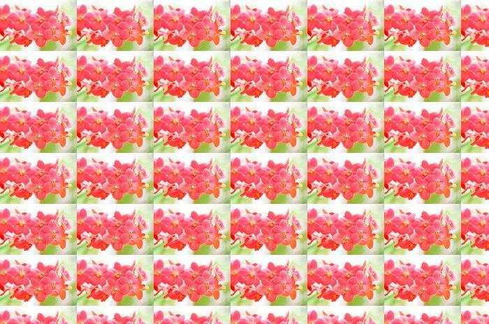Vinylová Tapeta Orchideje - Květiny
