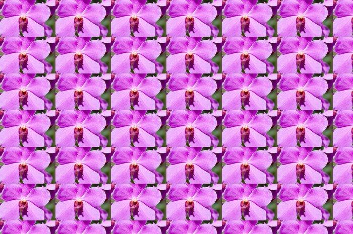 Vinylová Tapeta Fialová orchidej - Květiny