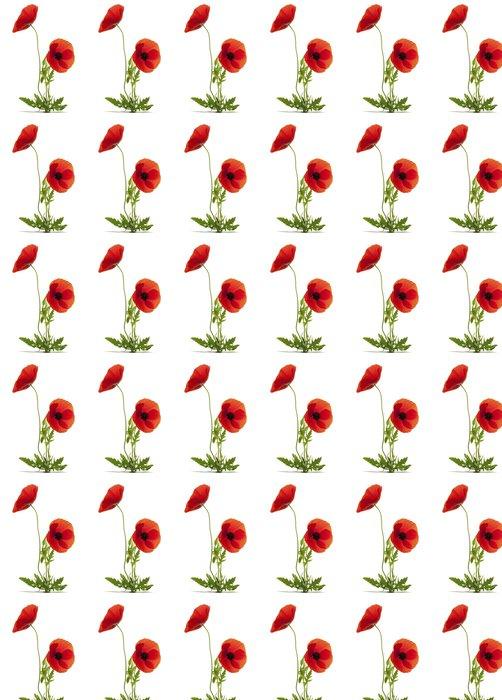 Vinylová Tapeta Dva bílé květy máku - Květiny