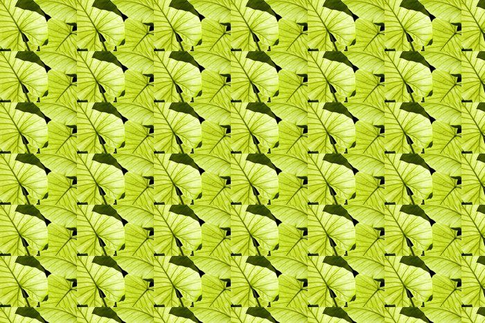 Vinylová Tapeta Podsvícený Alocasia zelené listy zobrazující žilnatinou - Rostliny