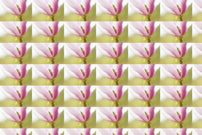 Vinylová Tapeta Yulan Magnolia Petal Pozadí - Pozadí