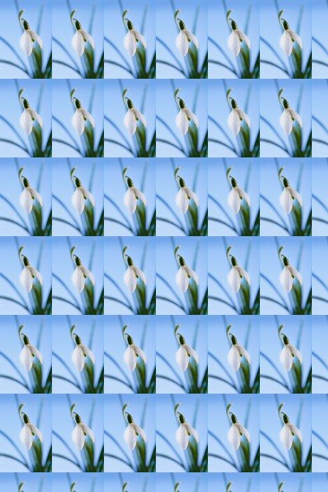 Vinylová Tapeta Jiskru sněženka květ v ranní rosou, rozostřený, blue backgrou - Roční období