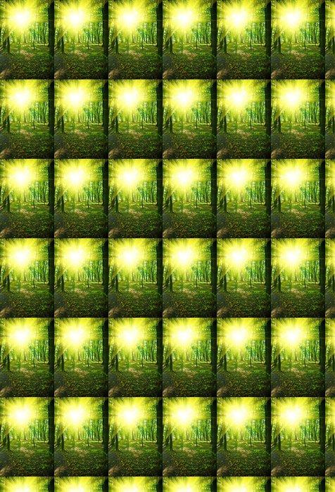 Vinylová Tapeta Ráno v zeleném parku - Lesy
