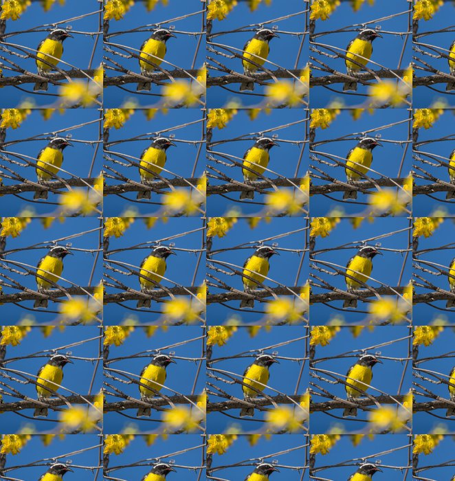 Vinylová Tapeta Ptáci na žluté květy - Ptáci