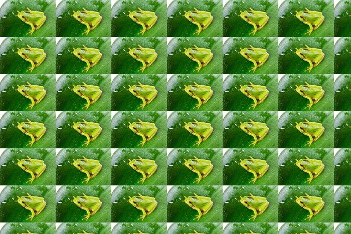 Vinylová Tapeta Zelený strom žába na listu zblízka - Ostatní Ostatní