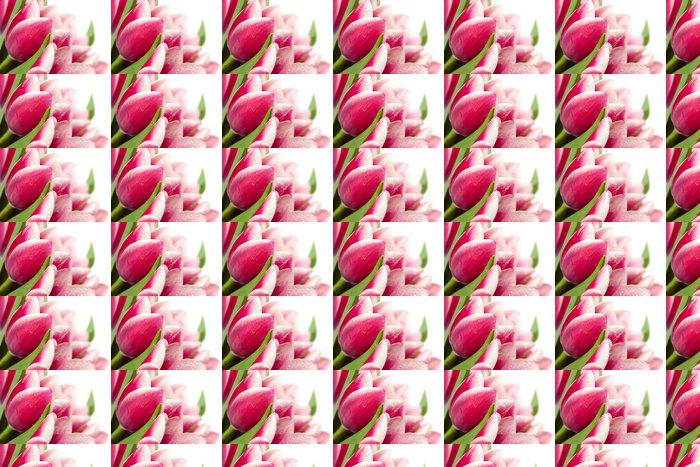 Vinylová Tapeta Růžové tulipány s kapkami vody na bílém pozadí / copy space fo - Témata