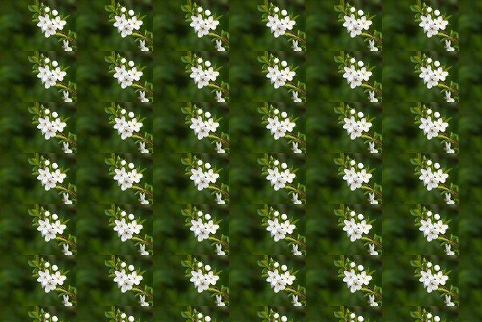 Vinylová Tapeta Strom s krásnými bílými květy - Roční období
